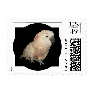 Moluccan Cockatoo Parrot Postage Stamp