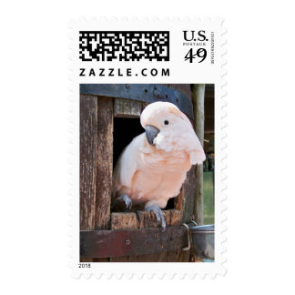 Moluccan Cockatoo Postage Stamps