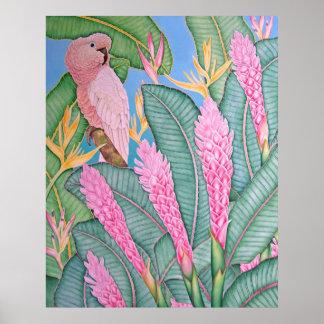 Moluccan Cockatoo Poster
