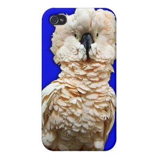 Moluccan iPhone 4 Case