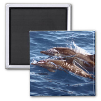 Mom and Baby Dolphin Magnet