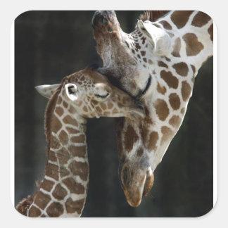 Mom and Baby Giraffe Cuddle Square Sticker