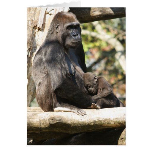 Mom and baby gorilla 2, greeting card