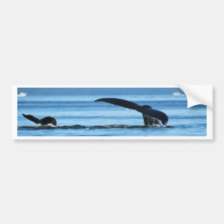 Mom and Baby Whales Tails.jpg Bumper Sticker