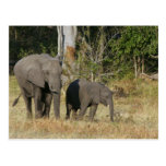 Mom and Happy Elephant Calf Postcard Post Cards