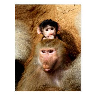 Mom and love Baboons Postcard