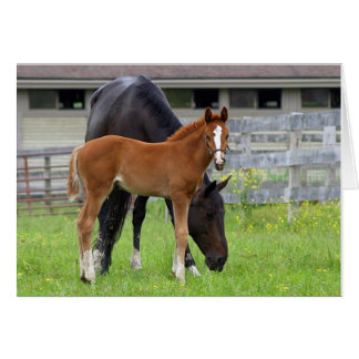 Mom and Me UMASS Filly Blank Greeting Card