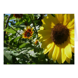Mom and Pop  Sunflower Card