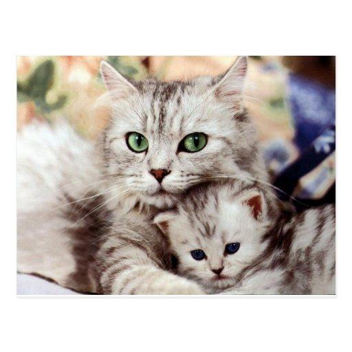 Mom and Son Postcard