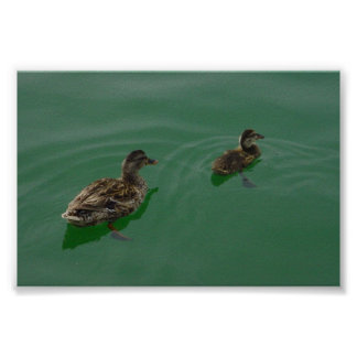 Mom & Baby Duck Poster