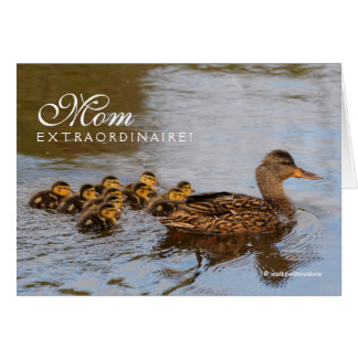 Mom Extraordinaire: One Prolific Mallard Hen