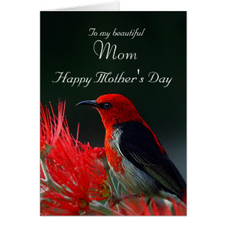Mom / Happy Mother's Day - Scarlet Honeyeater Card