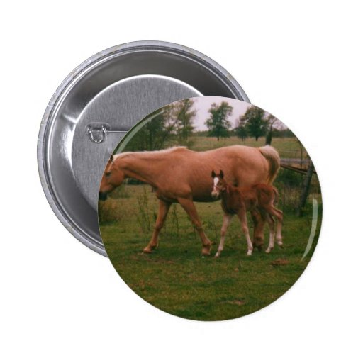 Moma horse and baby horse pinback button
