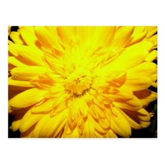 Momia amarilla brillante tarjetas postales