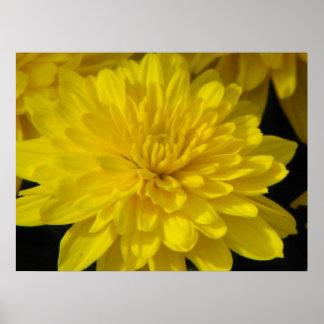 Momia amarilla poster
