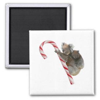 Momia y navidad del bastón de caramelo de la koala iman para frigorífico