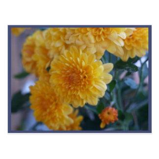 Momias amarillas postales