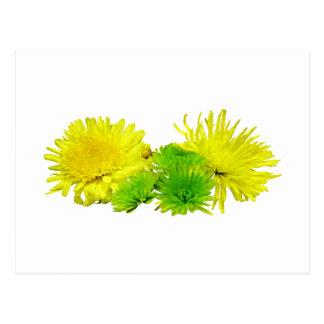 Momias amarillas y verdes tarjeta postal