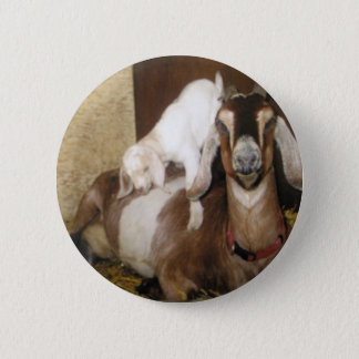 Momma and Baby Goat Pinback Button