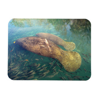 Momma and Baby Manatee Flexible Magnet