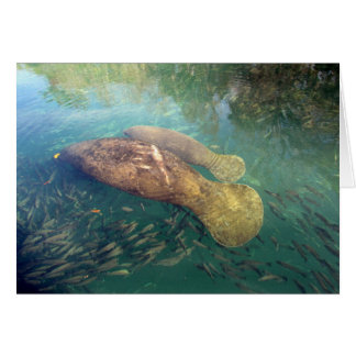 Momma and Baby Manatee Greeting Card