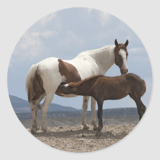Momma and Baby Mustang Stickers
