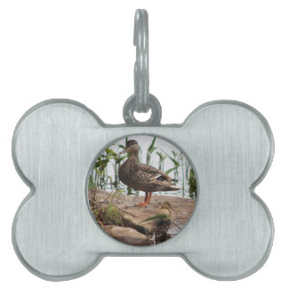 Momma & Baby 2 Pet Name Tag