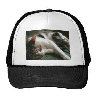 Momma Cat Mesh Hat