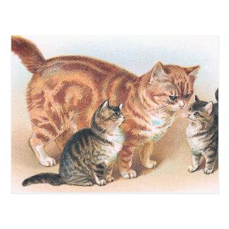 """Momma Cat"" Vintage Postcard"