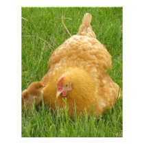 Momma chicken and baby chick letterhead