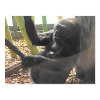 Momma Gorilla Postcard