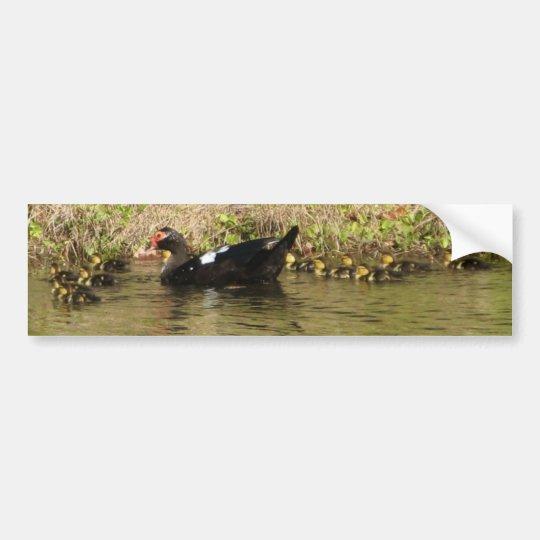 Momma Muscovy and Baby Ducks Bumper Sticker