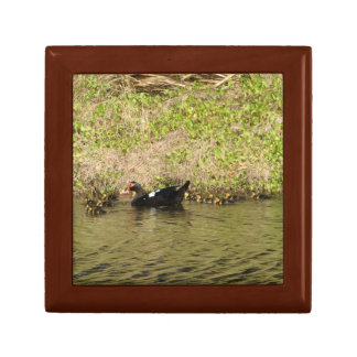 Momma Muscovy and Baby Ducks giftbox Jewelry Box