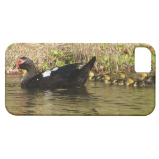 Momma Muscovy and Baby Ducks iphone case