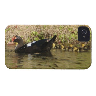 Momma Muscovy and Baby Ducks iphone case iPhone 4 Case