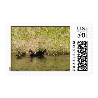 Momma Muscovy and Baby Ducks Postage