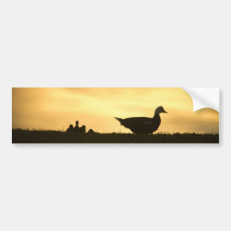 Momma Muscovy Duck and Baby Ducklings at Sunrise Bumper Sticker