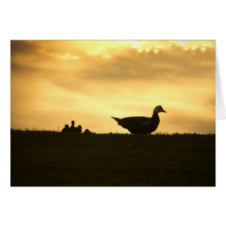 Momma Muscovy Duck and Baby Ducklings at Sunrise Card