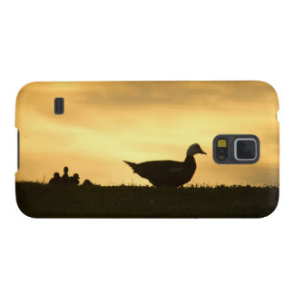 Momma Muscovy Duck and Baby Ducklings at Sunrise Samsung Galaxy Nexus Cases