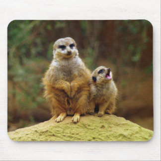 Momma y bebé Meerkat 1 Mousepad Tapetes De Ratón