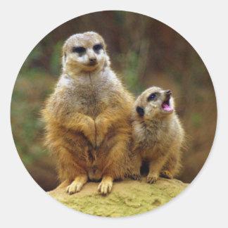 Momma y bebé Meerkat 1 pegatina