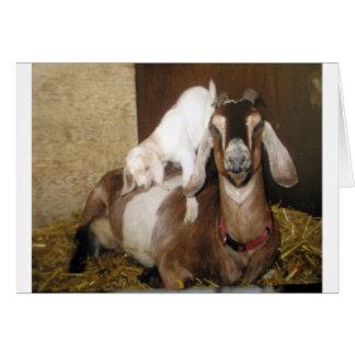 Momma y cabra del bebé tarjeton