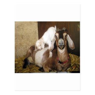 Momma y cabra del bebé postal