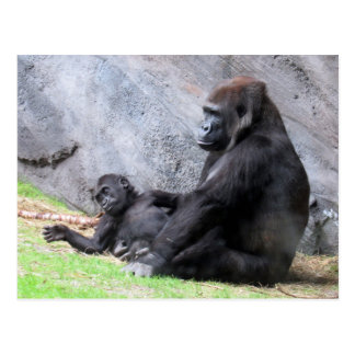Mommy and Baby Gorilla (4715) Postcard
