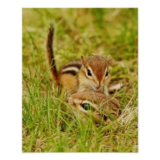 Mommy & Baby Chipmunk Posters