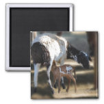 Mommy & Baby Goat 2 Inch Square Magnet