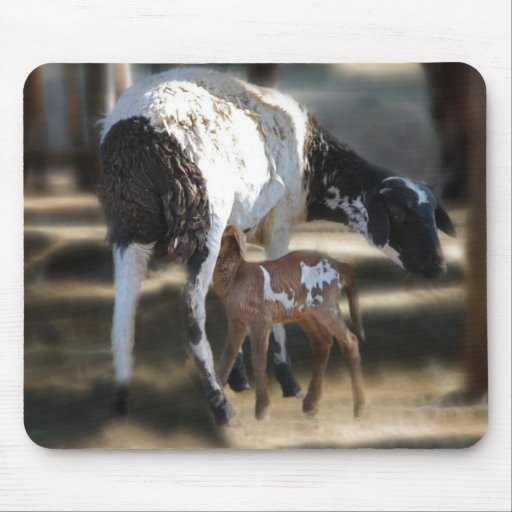 Mommy & Baby Goat Mouse Pad