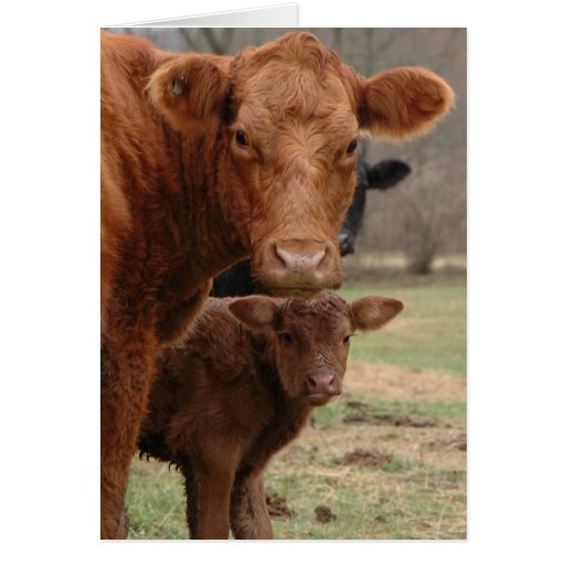 mommy cow and baby cow card