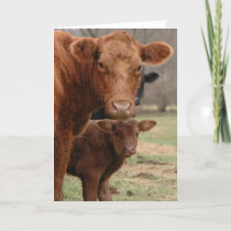 mommy cow and baby cow holiday card