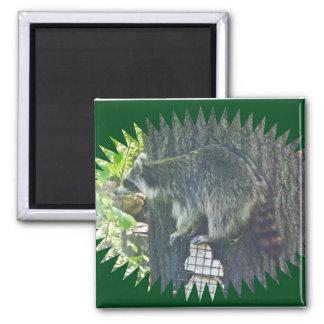 Mommy Raccoon on Suet Magnet